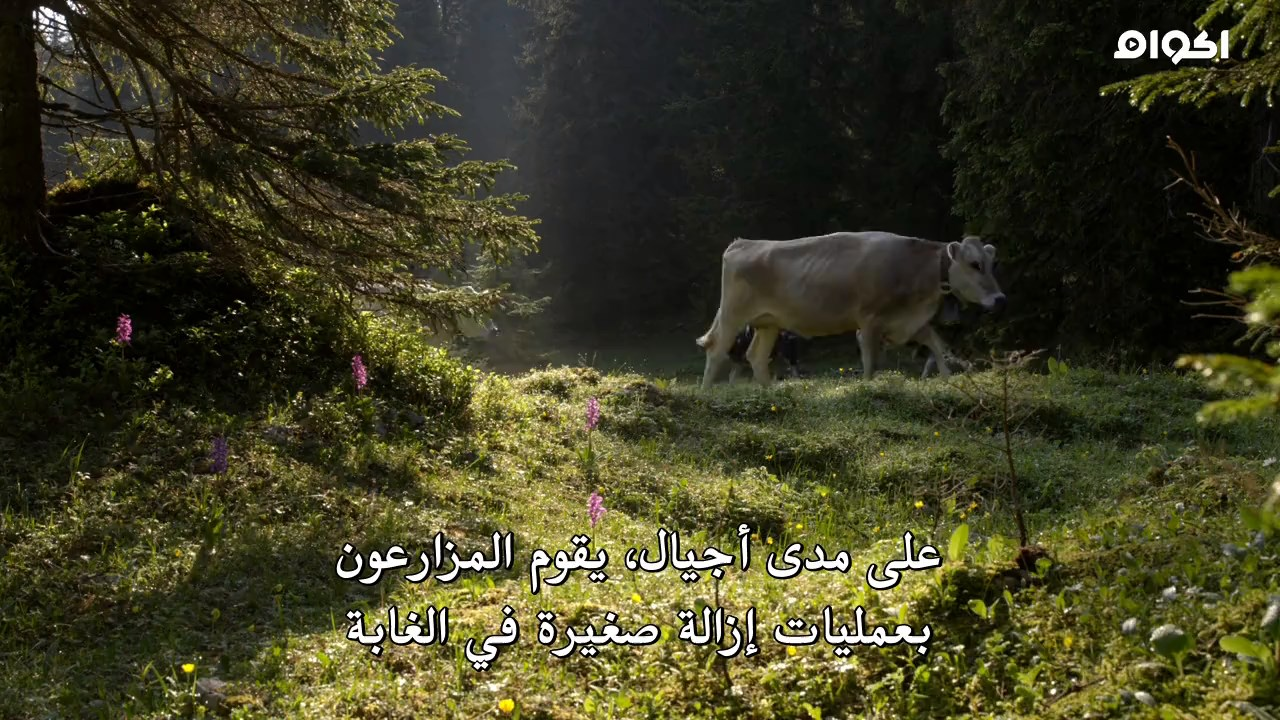 Attenborough and the Empire of the Ants,Attenborough,the Empire of the Ants,دافيد اتينبورو,جبال جورا,وثائقي